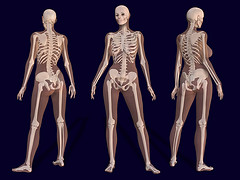 Straight Information about Bone Density Testing